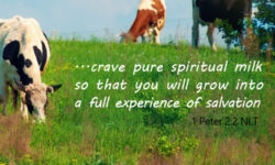 crave spiritual milk so that you will grow into a full experience of salvation
