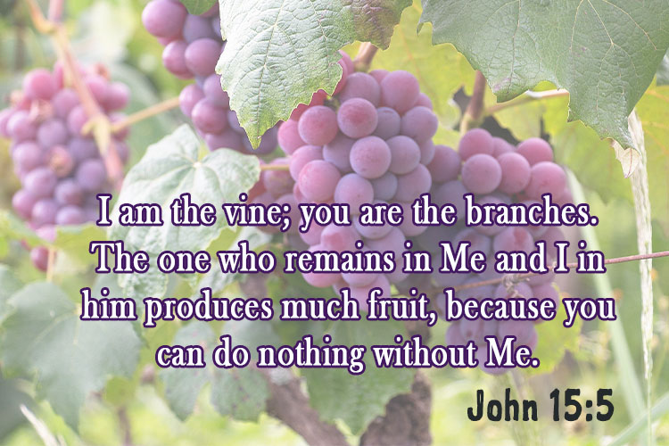 I am the vine; you are the branches. The one who remains in Me and I in him produces much fruit, because you can do nothing without Me. ~ John 15:5