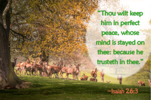 Thou wilt keep him in perfect peace, whose mind is stayed on thee: because he trusteth in thee.