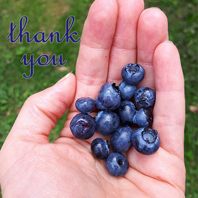 thank you God for blueberries