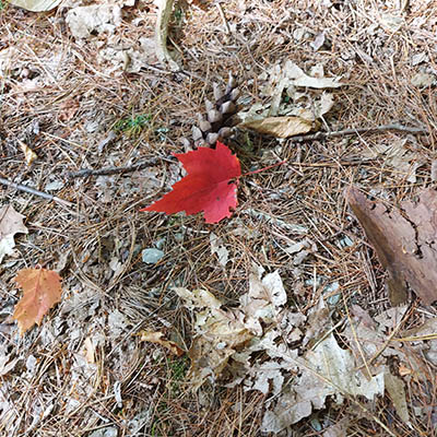 one red leaf on the ground around decomposing forest floor